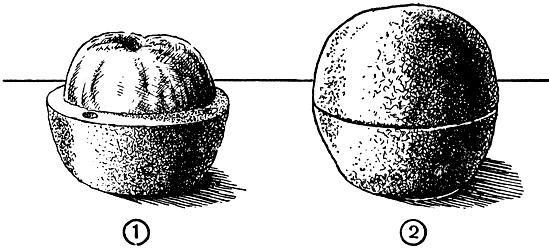 Рис. 255